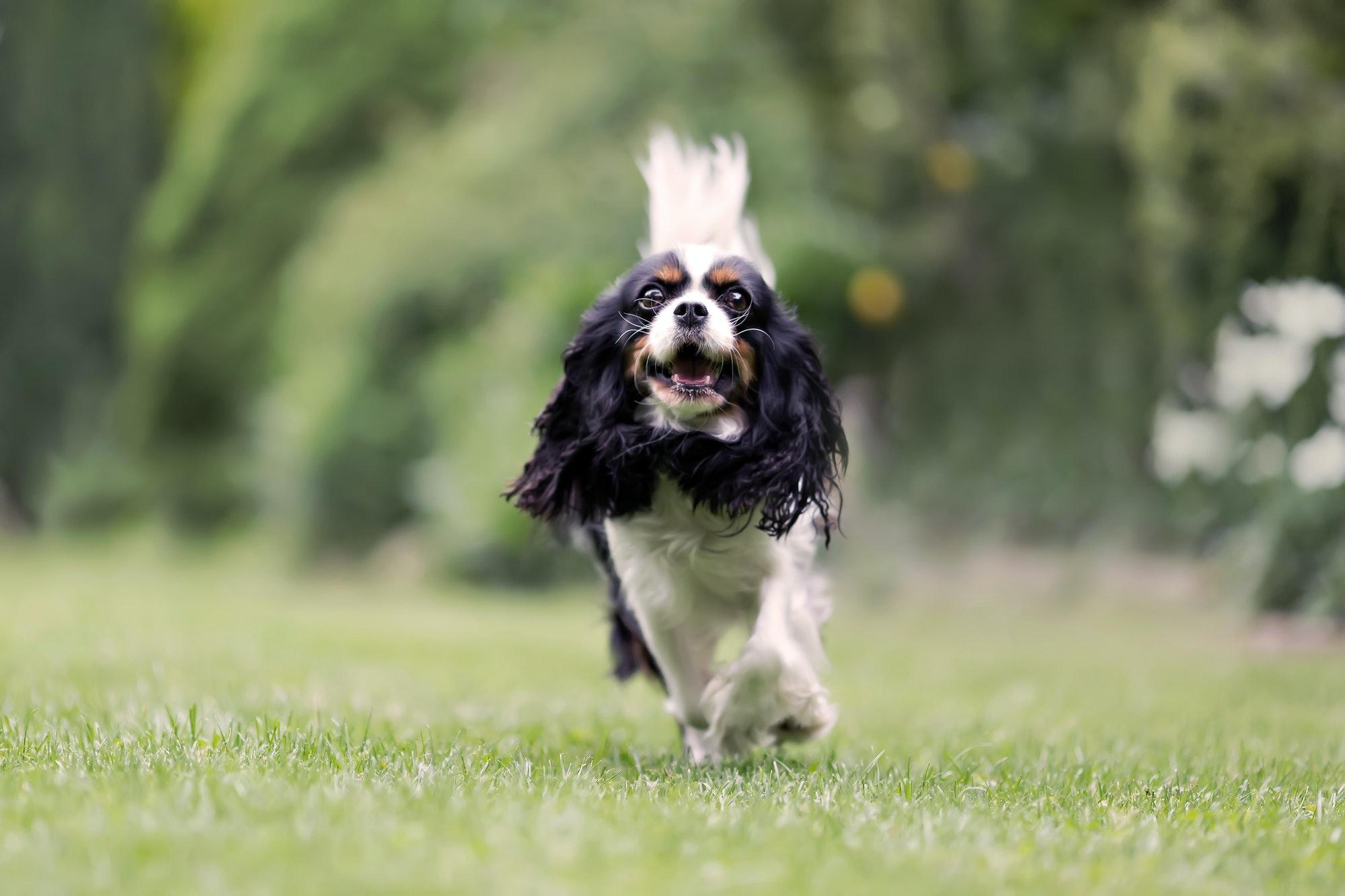Dog walking through the garden
