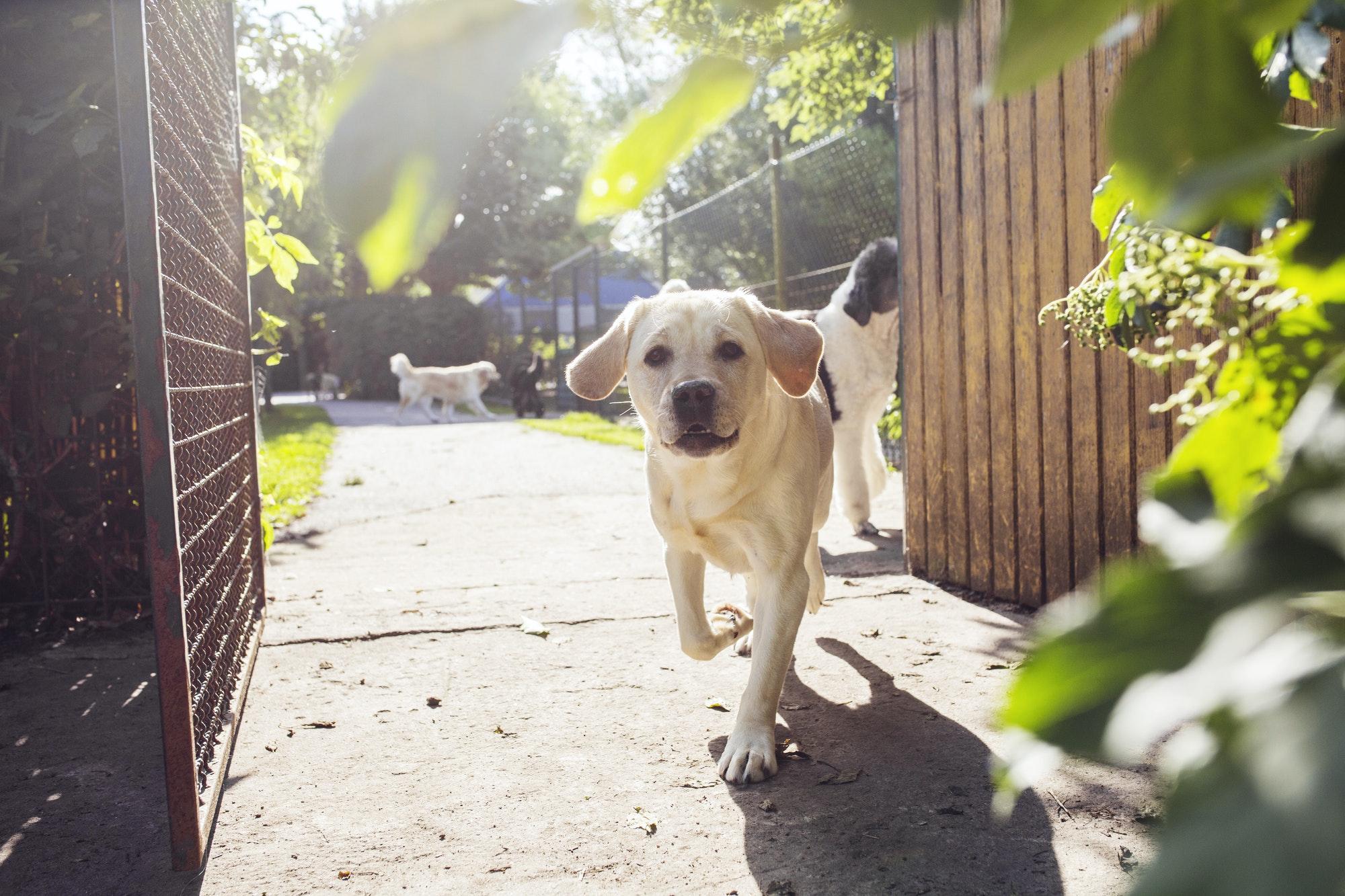 Dogs walking in park