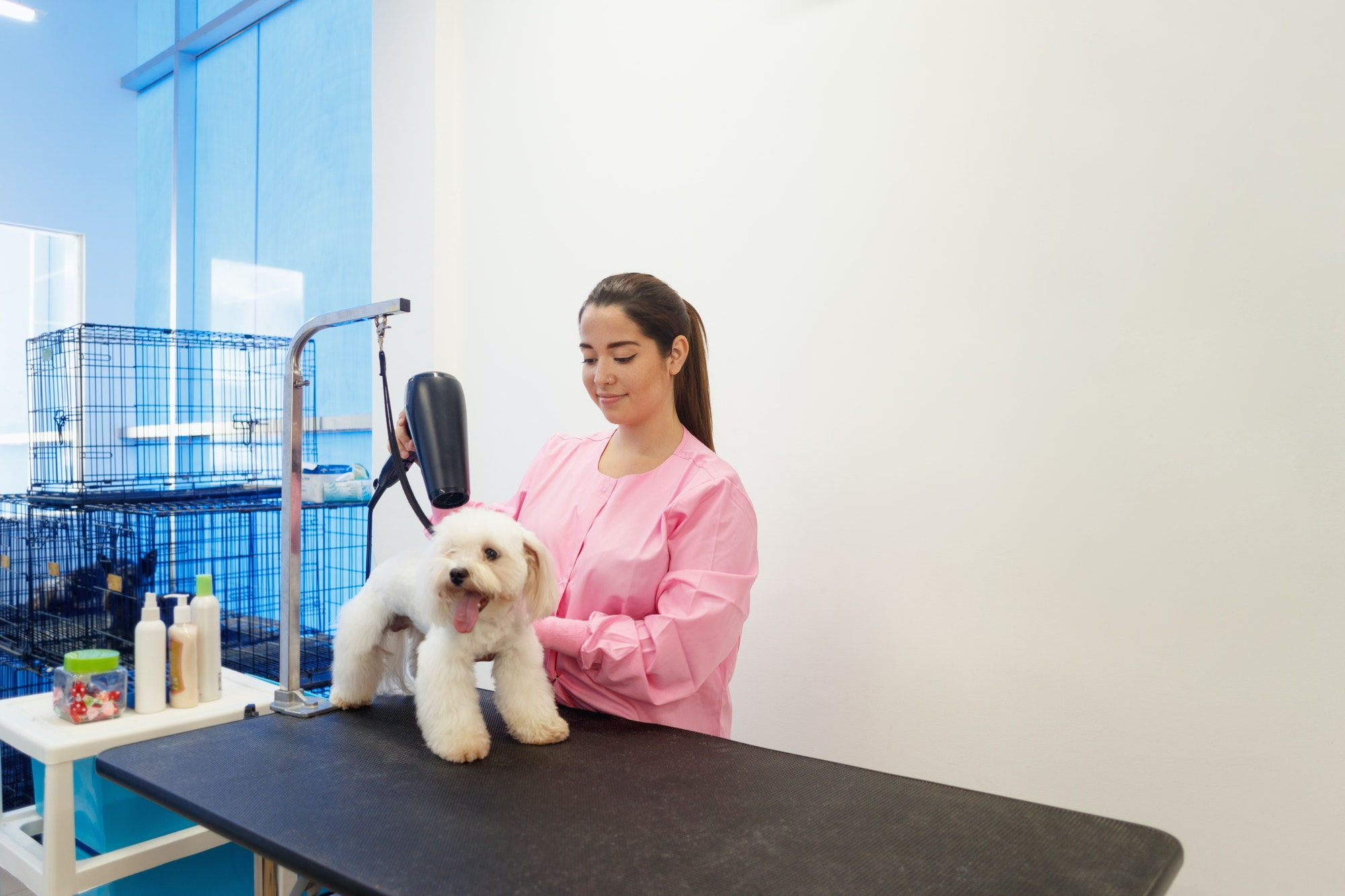 Woman At Work In Pet Store And Grooming Dog