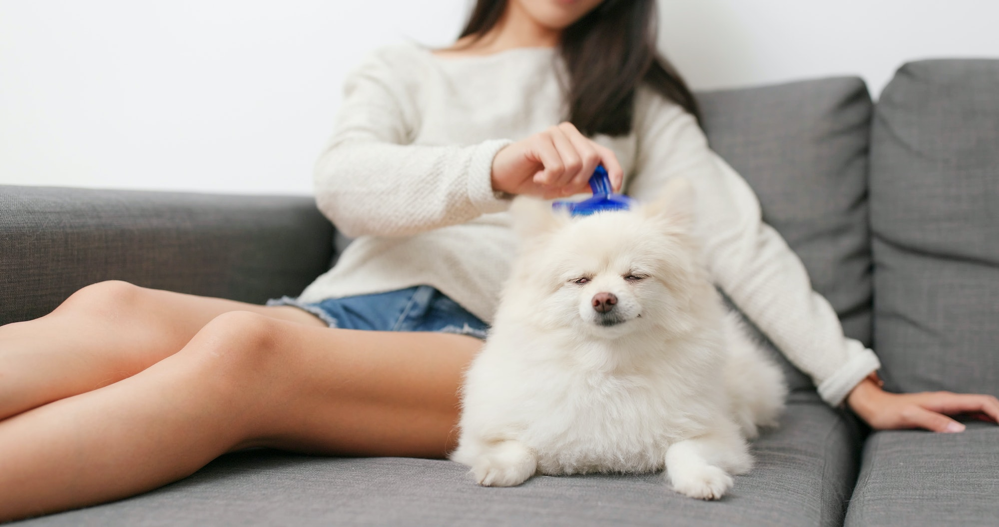 Woman brushing her dog at home